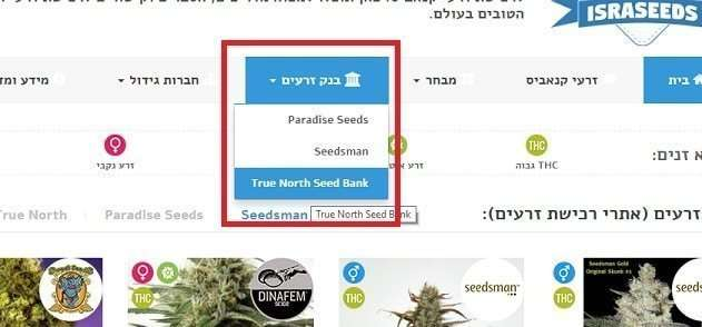 זני הקנאביס של True North