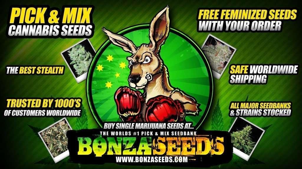 Bonza Seeds